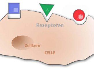 Riechrezeptoren - Eliane Zimmermann Aromatherapie
