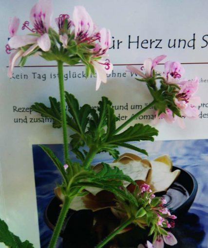 Aromatherapie in der Pflege