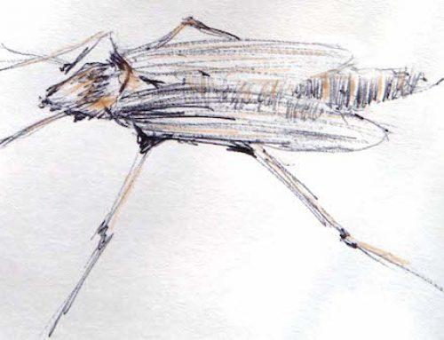 Insektenschutz für Groß und Klein