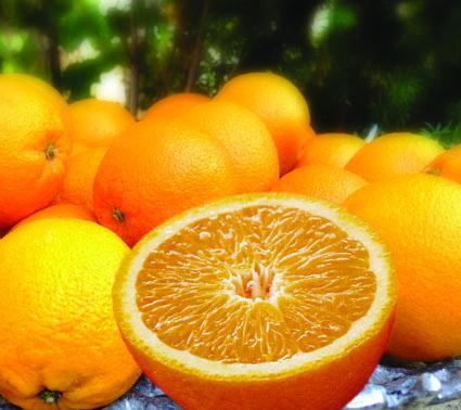 orangenteller_xs