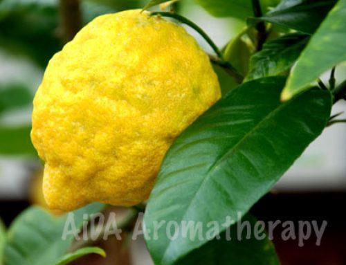 Zitronenöl enthält KEIN Vitamin C