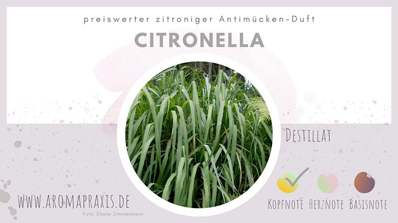 Zitronella-Gras