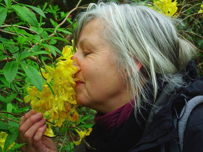 Aromatherapie Eliane Zimmermann, Duftwochen in Irland