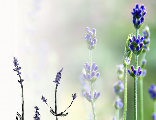 Aromatherapie bei Knieschmerzen